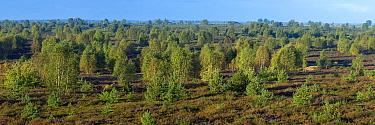 Panoramic landscape near Attengrabow, Saxony, Germany, September 2015.