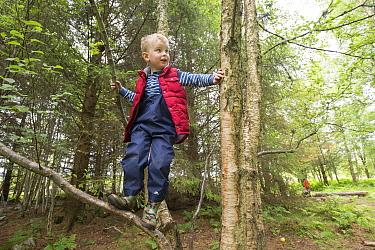 Boy climbing tree in woodland during forest kindergarten session. Aberdeen, Aberdeenshire, Scotland, UK. Editorial use only