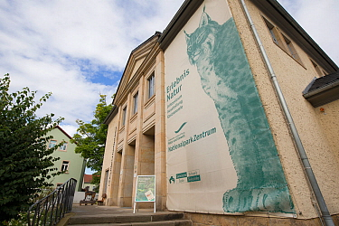 Painting on wall of Saxon Switzerland National Park information centre, part of Eurasian lynx (Lynx lynx) branding. Bad Schandau, Germany.