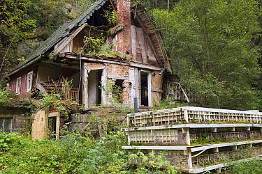 Nature reclaiming abandoned building. Bohemian Switzerland National Park, Czech Republic.