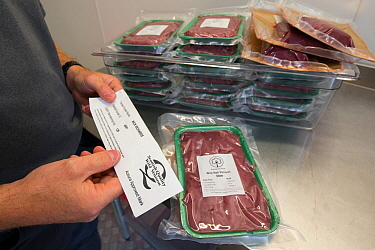 Wild venison producer, Forest to Fork, demonstrating Quality Assurance certification for culled deer. Meat products in background. Culbokie, Ross and Cromarty, Scotland, UK.