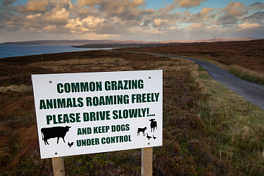 Information Sign in Wester Ross indicating livestock grazing on moorland, Gairloch, Highlands, Scotland, UK.