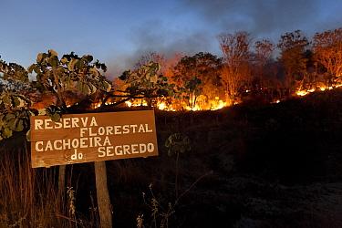 Forest fire in the Cerrado during dry season. Chapada dos Veadeiros National Park, Goias, Brazil. September 2010.