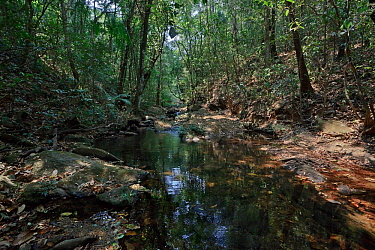 River through forest in Cerrado. Chapada dos Veadeiros National Park, Goias, Brazil.