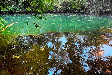 Trees reflected in spring fed pool, Baia Bonita Ecological Reserve, Cerrado. Mato Grosso do Sul, Brazil.