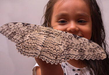 Girl with a large White Witch moth (Thysania agrippina) on her hand. Iquitos, Peru. Model released.