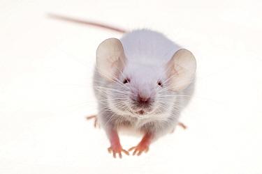 White mouse on white background.