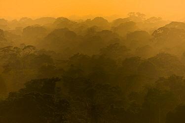 Rainforest landscape, Tambopata, Peru.