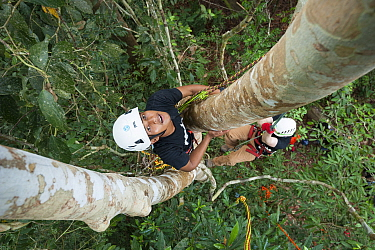 Tree climbing training for Human Orangutan Conflict Response Unit (HOCRU) team members in a forest in North Sumatra, April 2015.