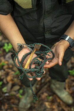 Snare held in human hands - rangers collect data and destroy snares in primary rainforest, in order to protect native wildlife such as elephants, rhinos, tigers and orangutans. September 2018.