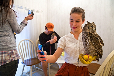 People photographing Spotted eagle owl (Bubo africanus) and taking selfies with mobile phones at the Akiba Fukurou Owl Cafe, Tokyo, Japan.