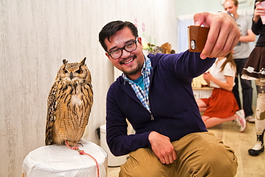 Tourist taking selfie wtih Eagle owl (Bubo sp) at the Akiba Fukurou Owl Cafe in Tokyo, Japan