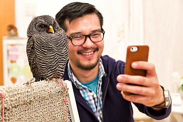 Tourist taking a selfie with a Black-banded owl (Strix huhula) at the Akiba Fukurou Owl Cafe in Tokyo, Japan