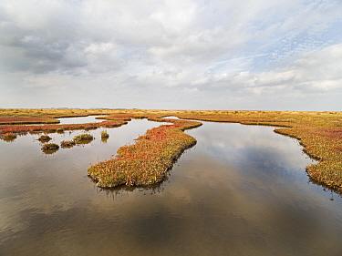 Autumn colours of saltmarsh. Holkham National Nature Reserve, North Norfolk, England, UK. October.