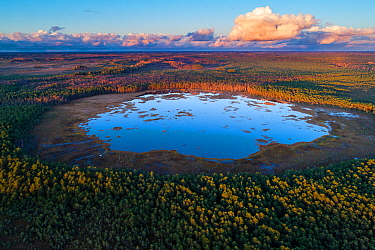 Lake and surrounding forest in evening light. Seli Bog, Korvemaa Nature Reserve, Jarvamaa, Central Estonia. October 2017.