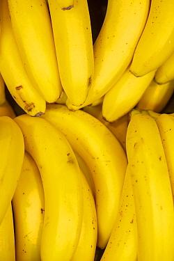 Bananas for sale in supermarket.