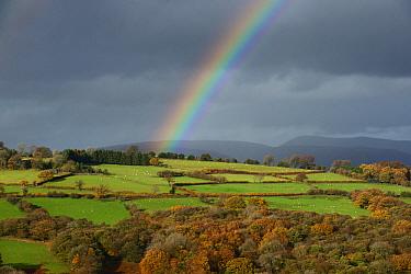 Sheep pasture with hedges and oak woodland in autumn colour and a rainbow over Pen Tir, Brecon Beacon National Park, Breconshire, Wales, November 2018.