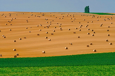 Farmland with straw bales, Le Herie La Vieville, Picardy, France, July 2018.