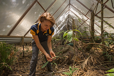 James Cook University's Susan Laurance - Tropical Leader at the Centre for Tropical Environmental and Sustainability Studies and College of Marine and Environmental Sciences leads the Daintree Dro...