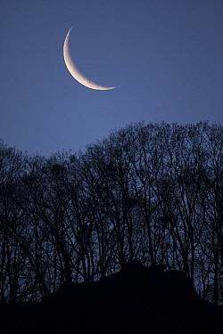 Setting crescent moon, Tangjiahe Nature Reserve, Sichuan Province, China. April 2015.