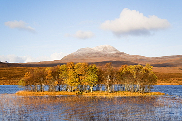 Forested island in front of Canisp, Loch Awe, Assynt, Scotland, UK, November 2016.