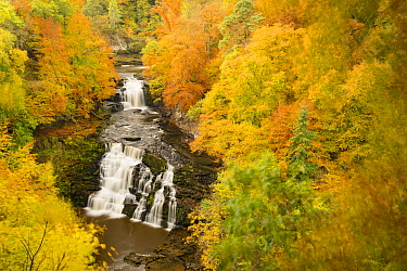 Corra Linn waterfall at Falls of Clyde in late autumn, Lanarkshire, Scotland, UK, October 2015.