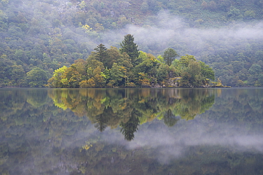 Forested island on Loch Lomond, Loch Lomond and the Trossachs National Park, Scotland, UK