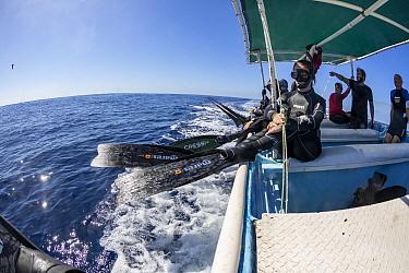 Free divers preparing to photograph Striped marlin feeding on Sardine bait ball. Magdalena Bay, Baja California Sur, Mexico.