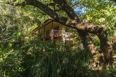 Lumholtz Lodge - Bed and Breakfast and home of Margit Cianelli, tree kangaroo wildlife carer. Lumholtz Lodge, Atherton Tablelands, Queensland, Australia. Model released.