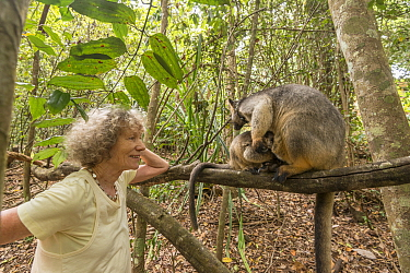 Margit Cianelli with Lumholtz tree kangaroo (Dendrolagus lumholtzi) 'Kimberley', a kangaroo she raised from a baby, now living in nearby forest with her own joey. Lumholtz Lodge, Atherton Tabl...