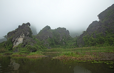 Van Long Nature Reserve, home of the critcally endangered Delacour's langurs (Trachypithecus delacouri) Ninh Binh, Vietnam.