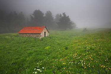 Mountain hut near the top of the Valley de Combeau, with wildflower meadow containing Bird's foot trefoil (Lotus corniculatus), Ox-eye daisy (Leucanthemum vulgare) and Mountain cornflower (Centaurea),...