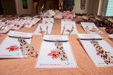 Jewelry made from the tails of invasive lionfish (Pterois volitans) Eleuthera, Bahamas.