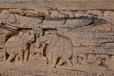 Elephants depicted in ancient scroll carving, Polonnaruwa, Sri Lanka.