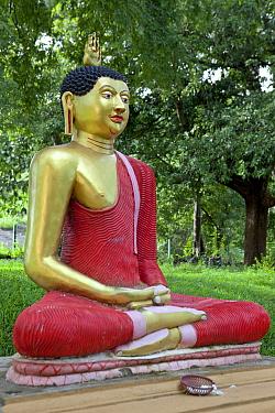 Buddha statue, Dambulla, Sri Lanka.