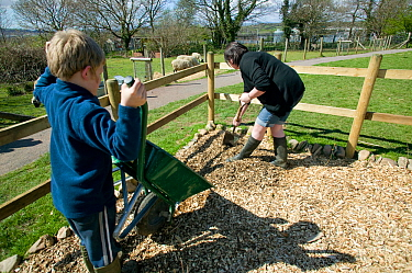 Volunteers putting in woodchip paths in commmunity farm, part of Swansea city Council environmental work to create a green city, April 2009.