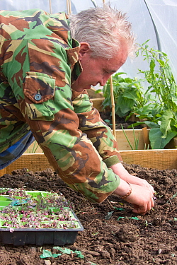 Unemployed volunteer planting out cabbage and vegetable plants in project to encourage sustainable food production from unemployed volunteers, Blaen y Maes Swansea, Wales, UK 2009. No release availabl...