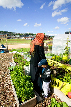 Bangladeshi woman and son in community allotment on former football pitch - Vetch field - in  Swansea West Glamorgan, Wales, UK, June 2006. Editorial use only