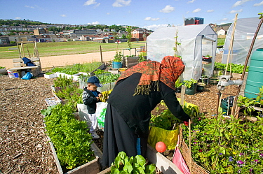 Bangladeshi woman and son in community allotment on former football pitch - Vetch field, Swansea West Glamorgan, Wales, UK, June 2006. Editorial use only