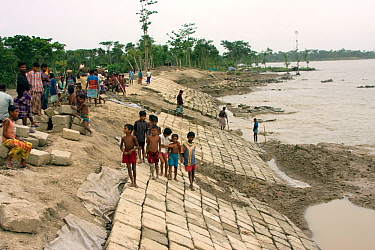 A sea wall being built to protect fishing village from floods, in response to rising sea levels due to climate change, Sundarbans, Bangladesh, June 2008