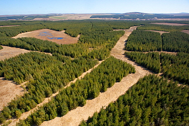Aerial view of blocks of forestry plantation planted on blanket bog. Forsinard, Caithness, Scotland, UK, May.