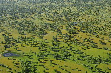 Aerial image of Dehesa forest and ponds, Salamanca Region, Castilla y Leon, Spain, May 2011.