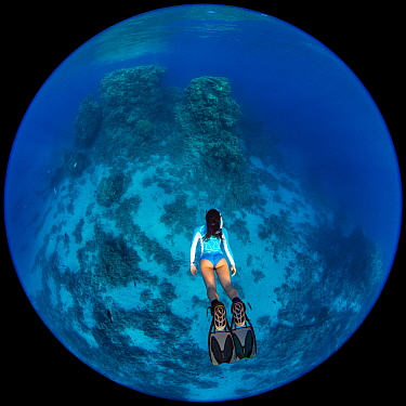 Circular fisheye photo of a woman snorkelling towards a coral reef. Temple, Sharm El Sheikh, Sinai, Egypt. Red Sea. Model released.