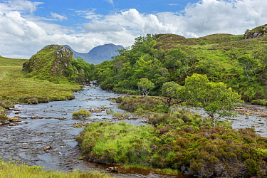 River Abhainn Osgaig and associated deciduous woodland, Coigach and Assynt Living Landscape, Scotland, UK, July.