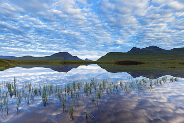Coigach hills (Cul Mor and Cul Beag) reflected in loch at dawn, Coigach and Assynt Living Landscape, Scotland, UK.July