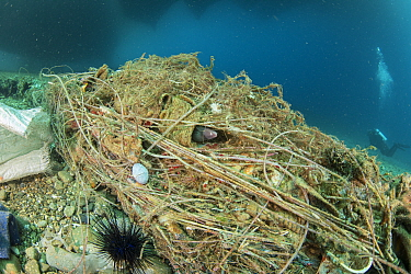 Eels, shrimps, urchins and many other marine life living among rubbish under a ships' harbour, Maluku, Indonesia. November.