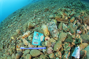 Cuttlefish, eels, shrimps, urchins and many other marine life living among rubbish under a ships' harbour, Maluku, Indonesia. November.