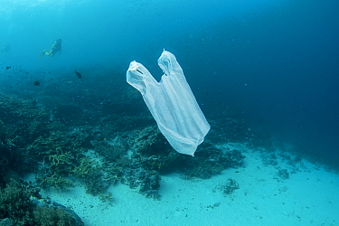 Divers swimming past a plastic bag floating underwater, resembling a jellyfish, Maluku, Indonesia. November 2018.