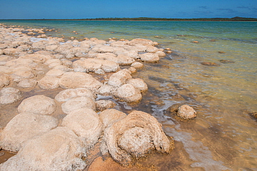 Thrombolites in Lake Clifton,, Yalgorup National Park, south west, Western Australia, April 2017
