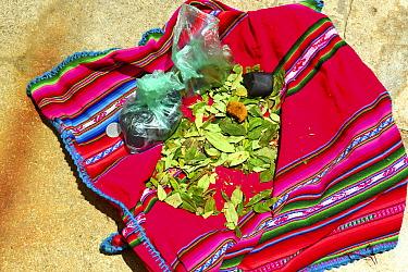 Coca leaves (Erythroxylum coca)on woven cloth, Lake Titicaca, Bolivia.